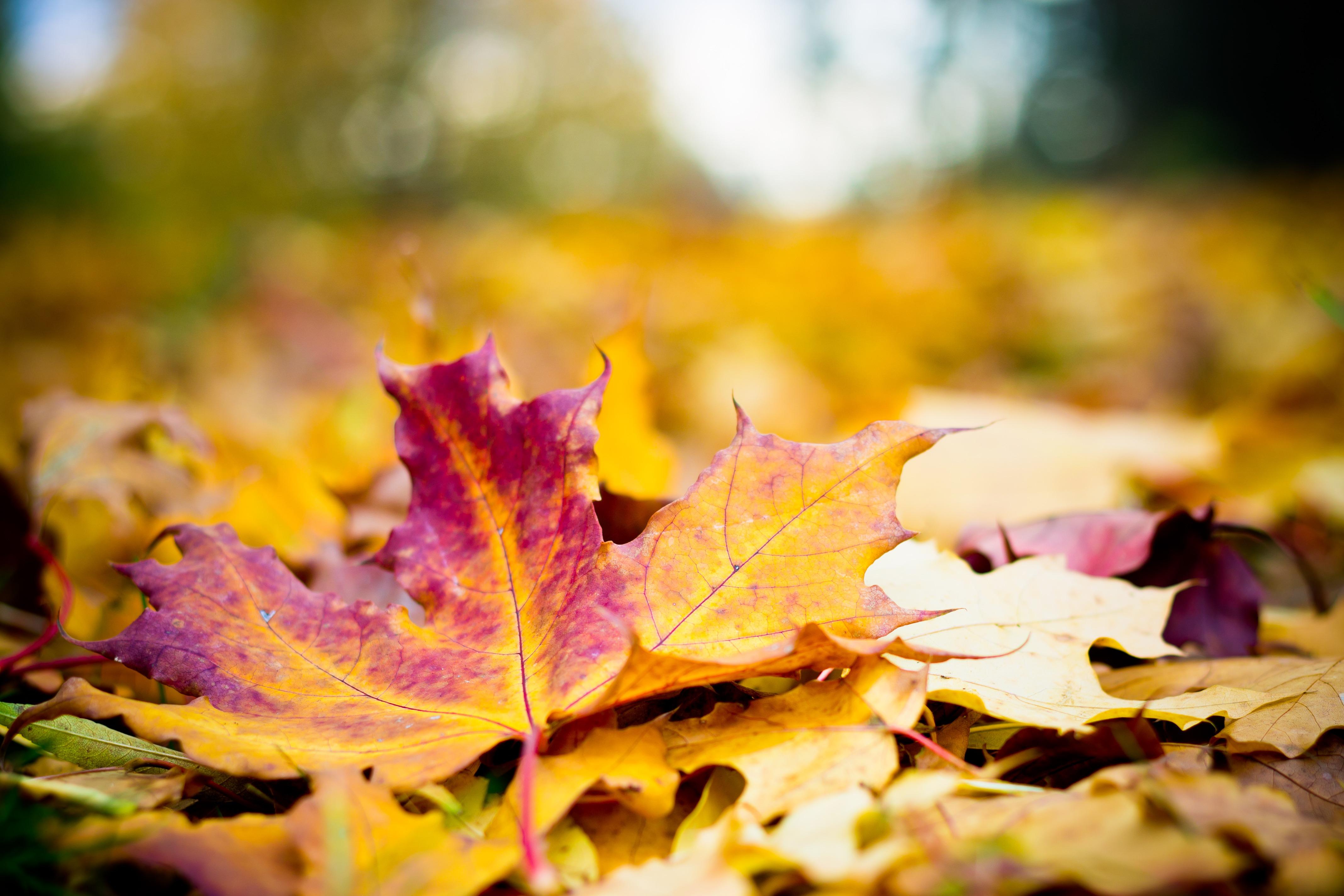 Podzim je tu!