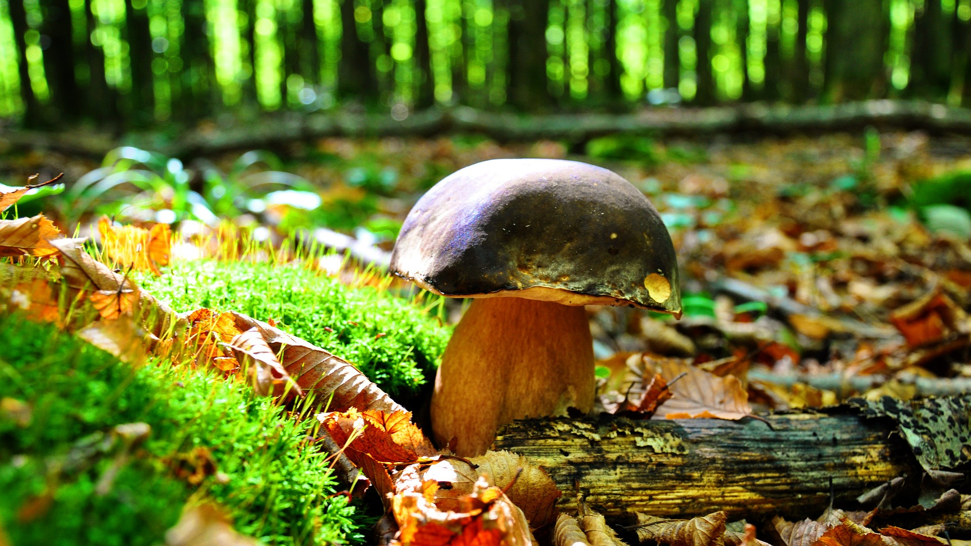 Ilustrační foto, my jsme na focení nějak neměli čas :-) Zdroj: www.pixabay.com