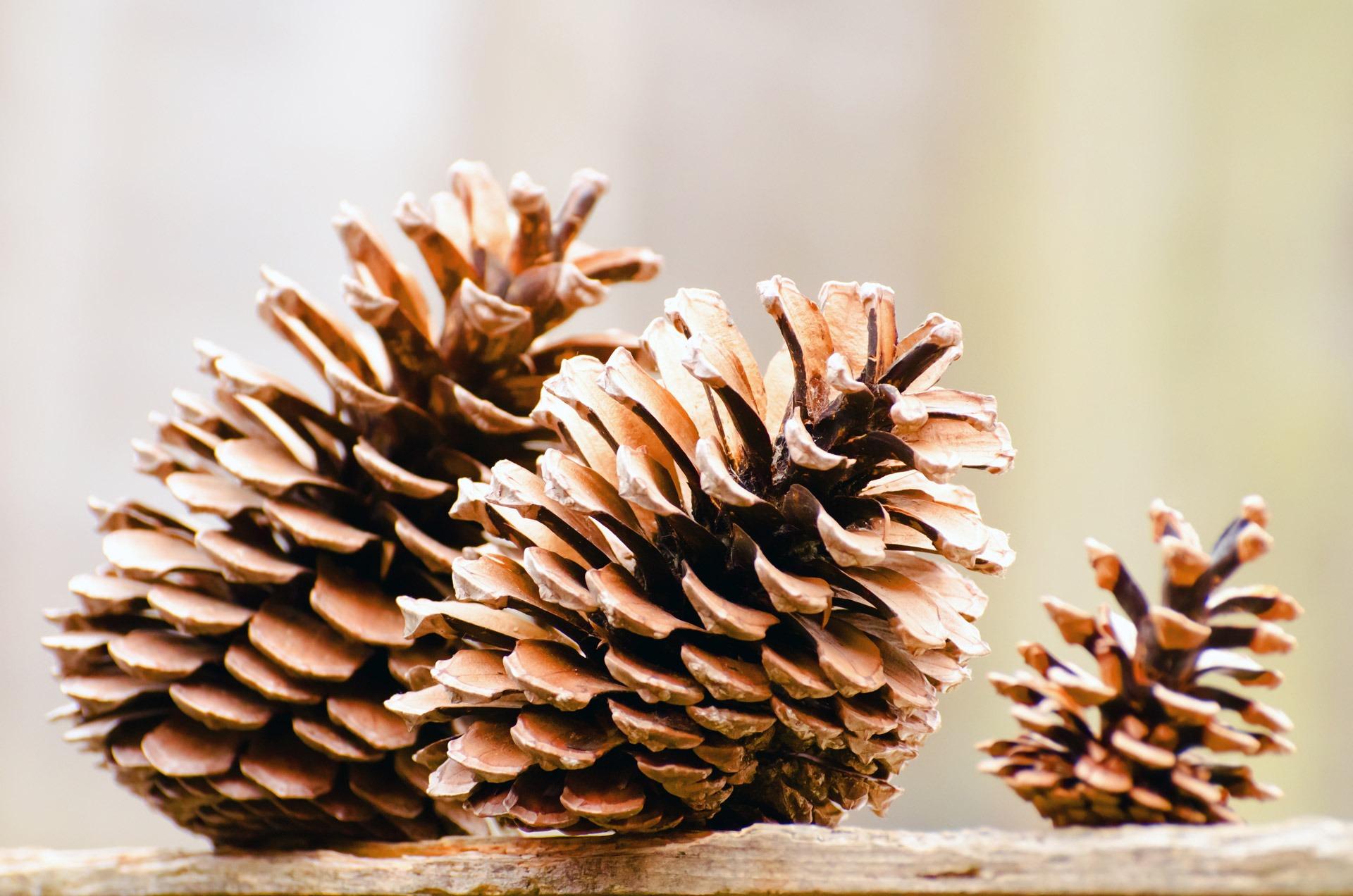 Ohlédnutí za… listopadem: ticho před bouří v očekávání adventu