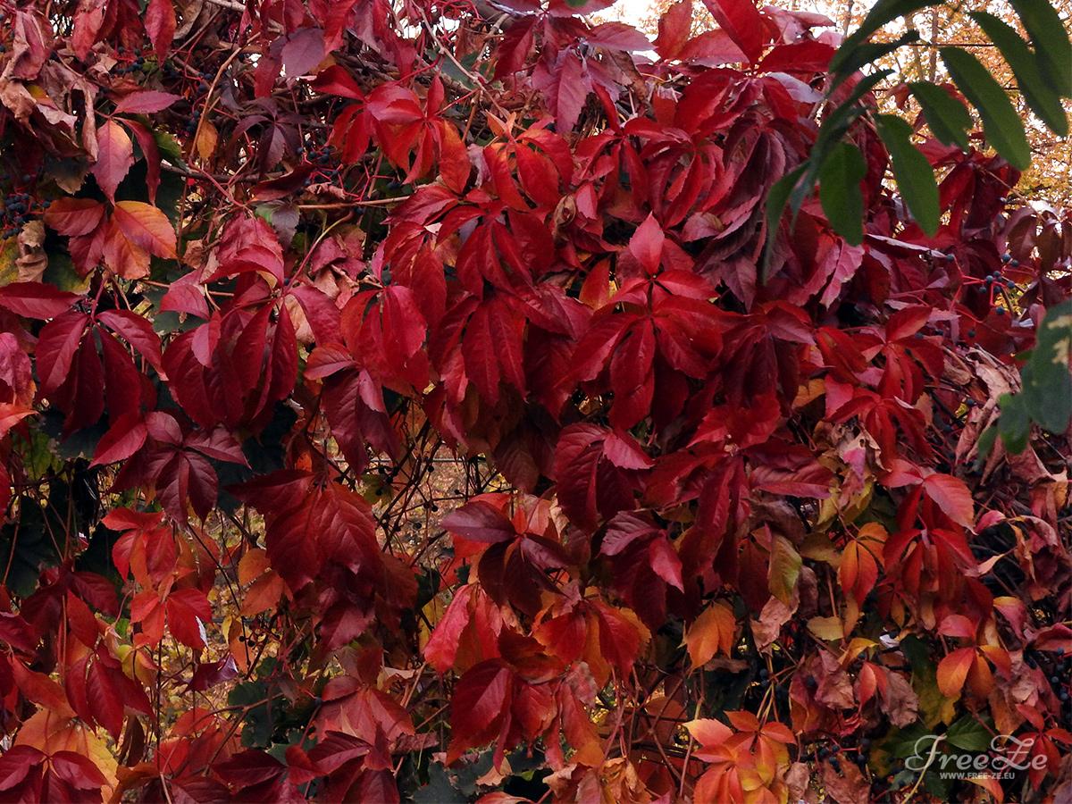 Krása zlatého podzimu