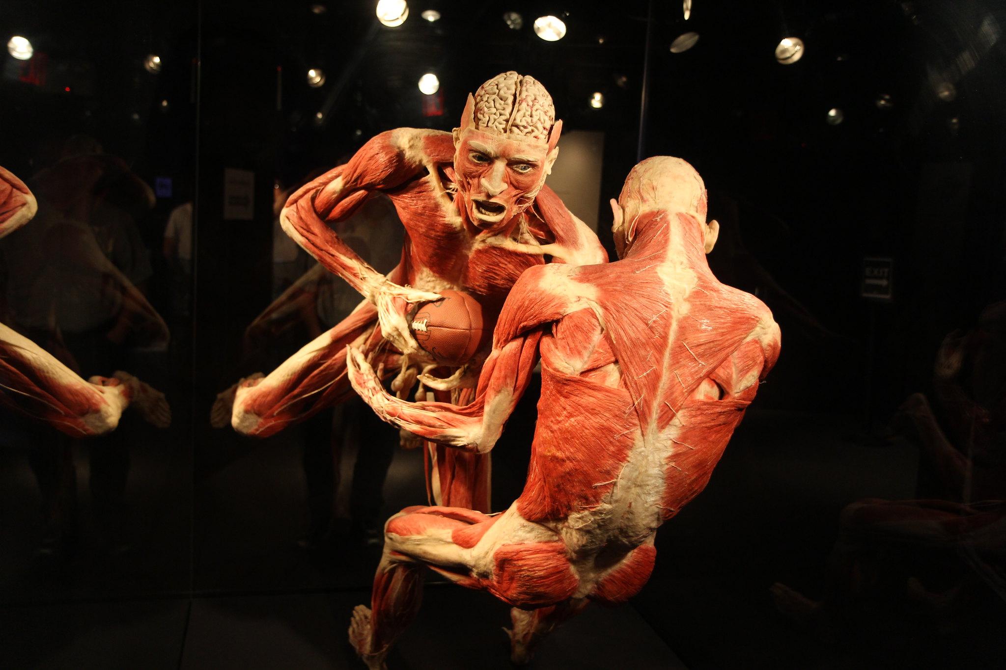 Bodies The Exhibition