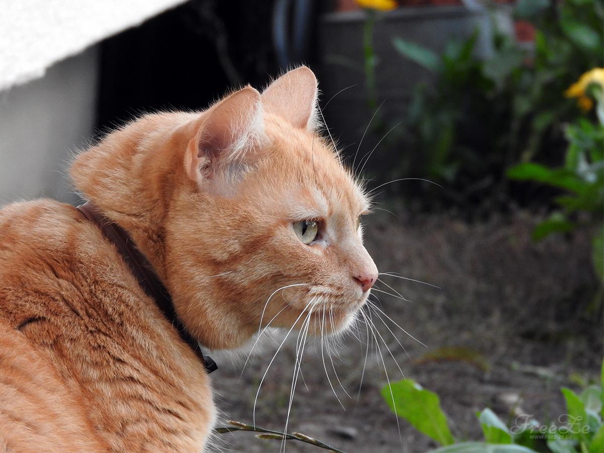 Konec roku | Kocour Zuzík na zahradě